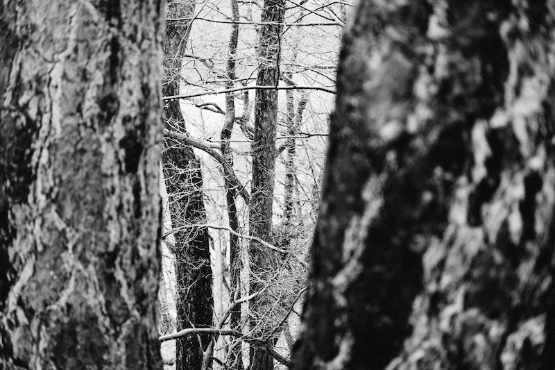 Waldstück Westerwald