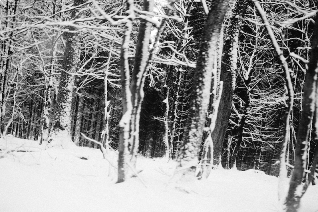 westerwald-snow-on-trees