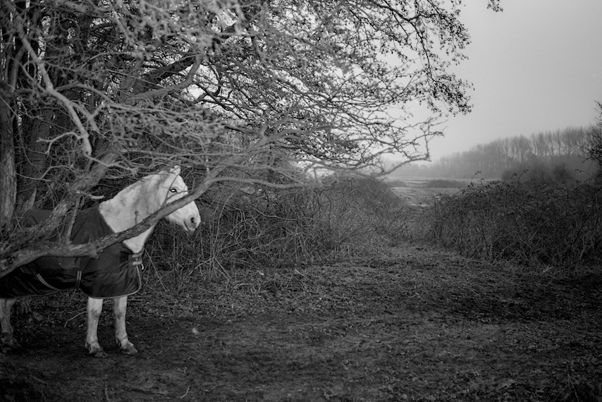 white-horse-in landscape-bw-scan