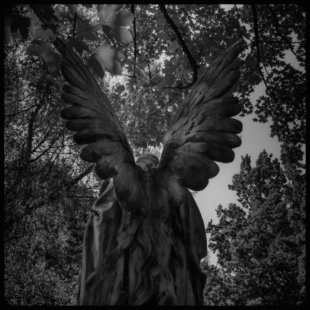 still-cologne-cemetary-melaten-I-angel-from-behind-