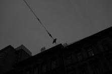Budapest-City-bw-6388