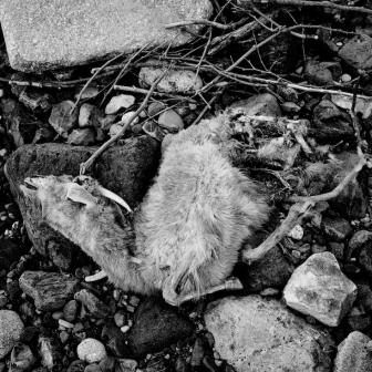 navidsonstreets-greece-samothraki-samothrace-dark-afternoon-deadgoat-9435