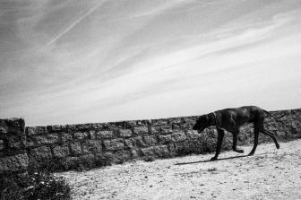 wassiliosnikitakis-bretagne-lecroisic-35mm-film-leica-m2-summicronasph-TRIX245